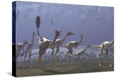 Herd of Mononykus Followed by a Flock of Pteranodons-Stocktrek Images-Stretched Canvas Print
