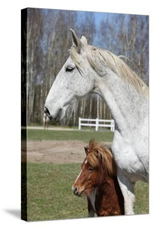 Big Horse with Pony Friend-Zuzule-Stretched Canvas Print