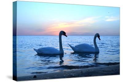 Swans-lindama-Stretched Canvas Print