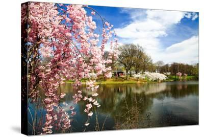 The Cherry Blossom Festival in New Jersey-Gary718-Stretched Canvas Print