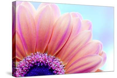 Flower Close-Up, Sunlight from Behind. Fresh, Spring Background-Michal Bednarek-Stretched Canvas Print