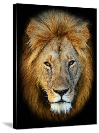 Masai Mara Lions-Kyslynskyy-Stretched Canvas Print