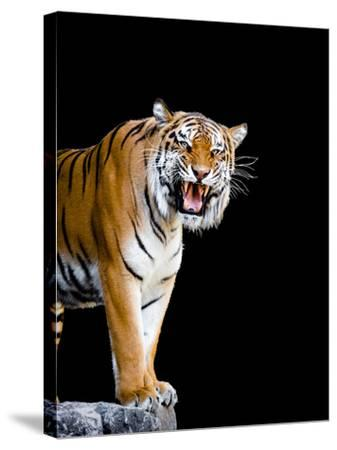Bengal Tiger-Lipik-Stretched Canvas Print