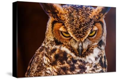 Great Horned Own-duallogic-Stretched Canvas Print