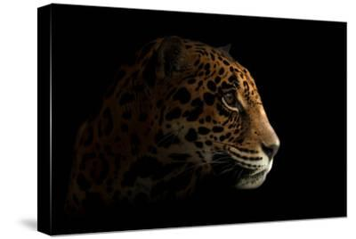 Jaguar ( Panthera Onca ) in the Dark-Anan Kaewkhammul-Stretched Canvas Print