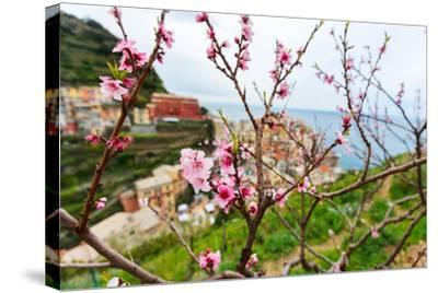 Spring Blooming Cherry Tree with Background Scenic View of Colorful Houses of Manarola Village, Cin-BlueOrange Studio-Stretched Canvas Print