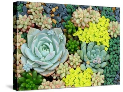 Miniature Succulent Plants-kenny001-Stretched Canvas Print