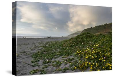 California Coast-wollertz-Stretched Canvas Print