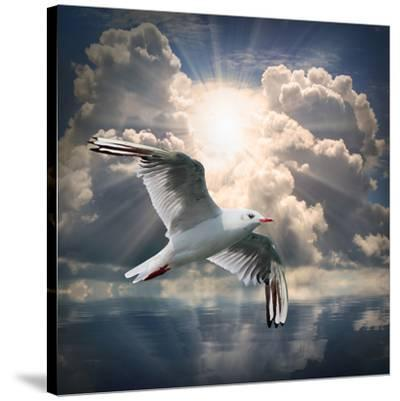 The Seagull Flying Over A Sea Against A Dramatic Sky. Background From Nature-Kletr-Stretched Canvas Print