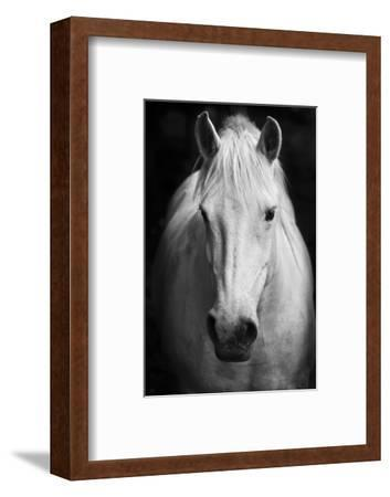 White Horse'S Black And White Art Portrait-kasto-Framed Premium Photographic Print