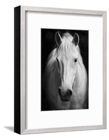 White Horse'S Black And White Art Portrait-kasto-Framed Premium Photographic Print