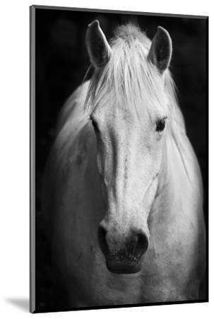 White Horse'S Black And White Art Portrait-kasto-Mounted Premium Photographic Print