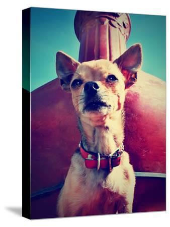 A Chihuahua Sitting in Front of a Fireplace-graphicphoto-Stretched Canvas Print