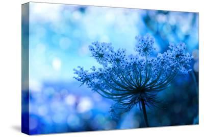 Wildflower Background-Malija-Stretched Canvas Print