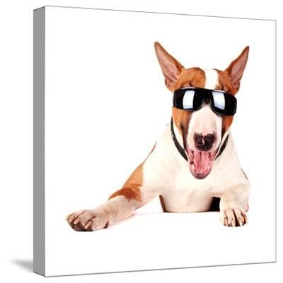 Cheerful Bull Terrier in Sunglasses-AZALIA-Stretched Canvas Print