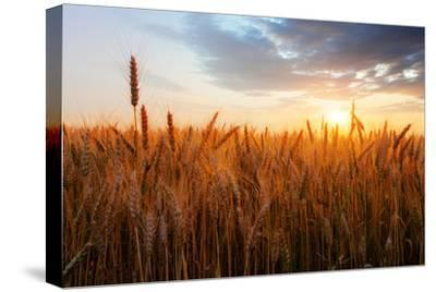 Wheat Field over Sunset-TTstudio-Stretched Canvas Print