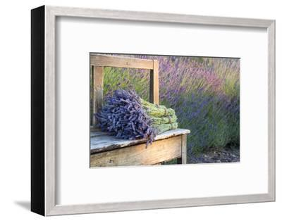 Bouquets on Lavenders on a Wooden Old Bench-Anna-Mari West-Framed Premium Photographic Print