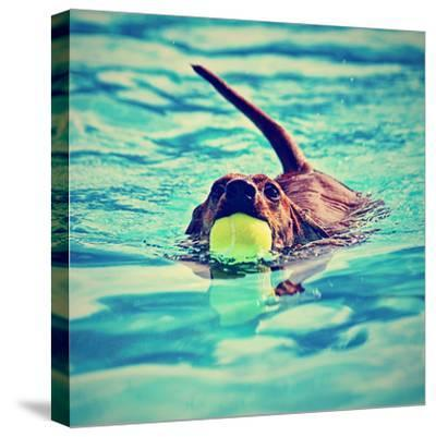 A Dachshund with a Ball in His Mouth-graphicphoto-Stretched Canvas Print