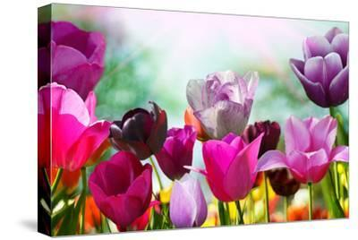 Beautiful Spring Flowers-Monia-Stretched Canvas Print