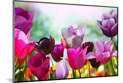Beautiful Spring Flowers-Monia-Mounted Premium Photographic Print