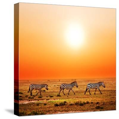 Zebras Herd on Savanna at Sunset, Africa. Safari in Serengeti, Tanzania-Michal Bednarek-Stretched Canvas Print
