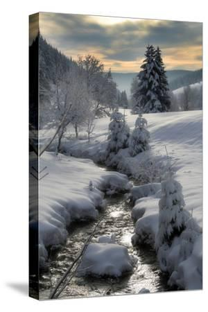 Winter-Hasenonkel-Stretched Canvas Print