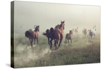 Horses in Dust-conrado-Stretched Canvas Print