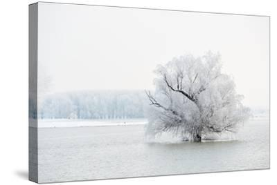 Winter Landscape-geanina bechea-Stretched Canvas Print