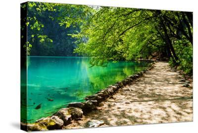 Path near A Forest Lake with Fish in Plitvice Lakes National Park, Croatia-Lamarinx-Stretched Canvas Print