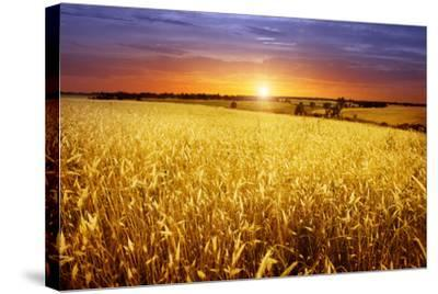 Colorful Sunset over Wheat Field.-Elenamiv-Stretched Canvas Print