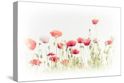 Abstract Floral Background in Vintage Style for Greeting Card. Wild Poppy Flowers on Summer Meadow.-Im Perfect Lazybones-Stretched Canvas Print