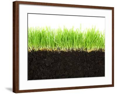 Cross-Section of Soil and Grass Isolated on White Background-viperagp-Framed Premium Photographic Print