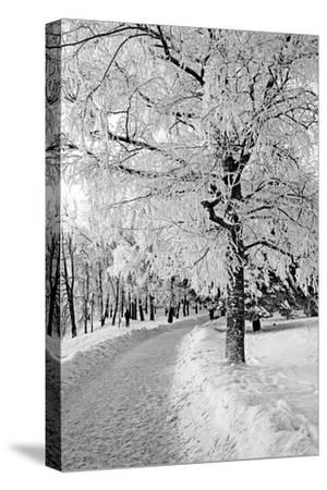 Lane in Town Park-basel101658-Stretched Canvas Print