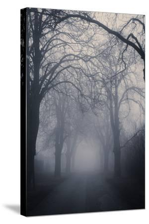 Straight Foggy Passage Surrounded by Dark Trees-vkovalcik-Stretched Canvas Print