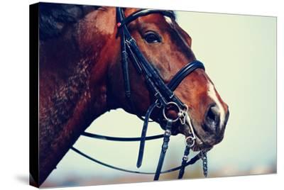Portrait of A Sports Brown Horse.-AZALIA-Stretched Canvas Print
