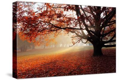 Alone Tree in Autumn Park-TTstudio-Stretched Canvas Print