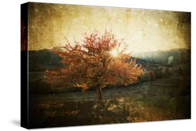 Lonely Beautiful Autumn Tree - Vintage Photo-melis-Stretched Canvas Print