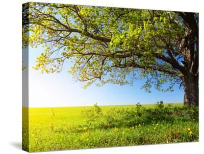 Spring Tree with Fresh Green Leaves on a Blooming Meadow-Dudarev Mikhail-Stretched Canvas Print