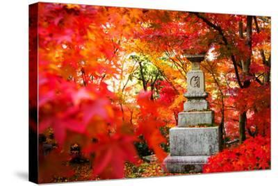 Autumn Japanese Garden with Maple-NicholasHan-Stretched Canvas Print