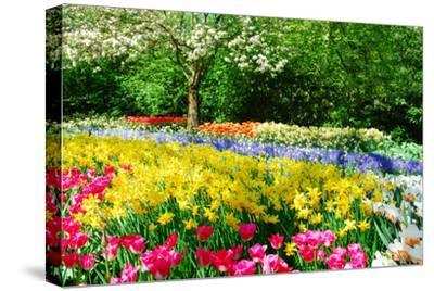 Colorful Springflowers and Blossom in Dutch Spring Garden 'Keukenhof' in Holland-dzain-Stretched Canvas Print