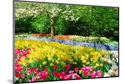 Colorful Springflowers and Blossom in Dutch Spring Garden 'Keukenhof' in Holland-dzain-Mounted Premium Photographic Print