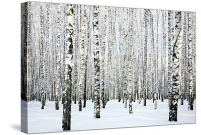 Winter Birch Forest-LeniKovaleva-Stretched Canvas Print
