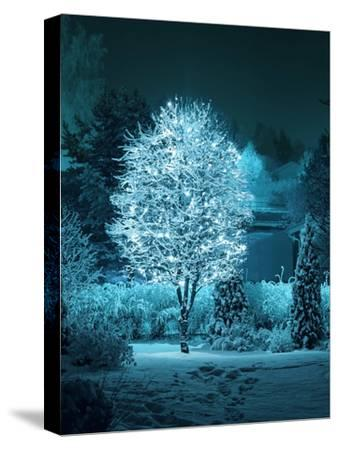 Illuminated Tree in Winter Garden-Hannuviitanen-Stretched Canvas Print