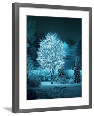 Illuminated Tree in Winter Garden-Hannuviitanen-Framed Premium Photographic Print