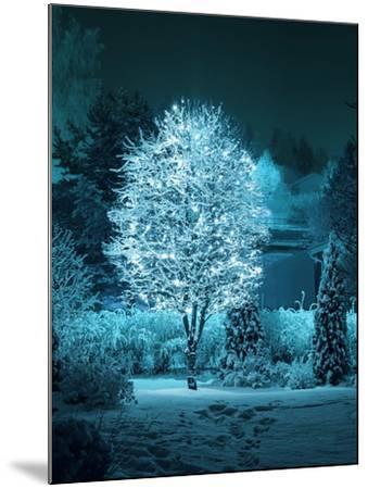 Illuminated Tree in Winter Garden-Hannuviitanen-Mounted Premium Photographic Print