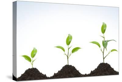 Evolution of A Young Plant-agencyby-Stretched Canvas Print