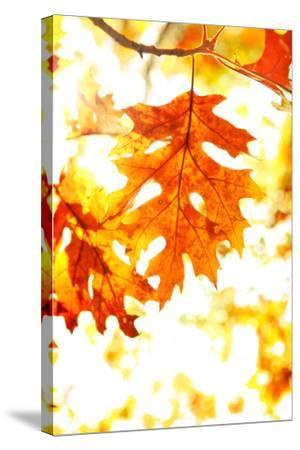 Colorful Autumn Leaves-soupstock-Stretched Canvas Print