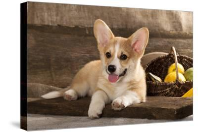 Cardigan Welsh Corgi Dog Breed-Lilun-Stretched Canvas Print