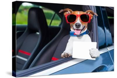 Dog Drivers License-Javier Brosch-Stretched Canvas Print