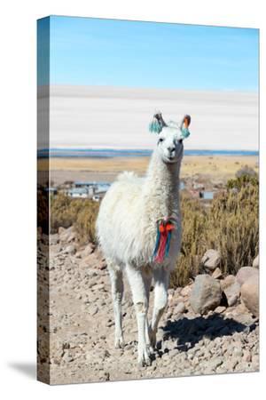 Llama with Uyuni Salt Flats-jkraft5-Stretched Canvas Print